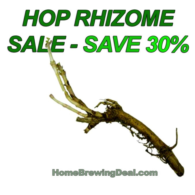 Save up to 30% on Rhizomes during the MoreBeer.com Hop Rhizome Sale! #homebrew #homebrewing #hop #rhizomes #seeds #growing #hops